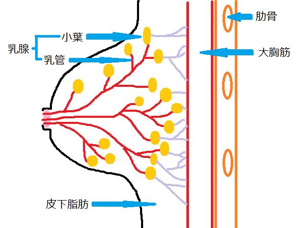 oppainoku-pa-jinntai