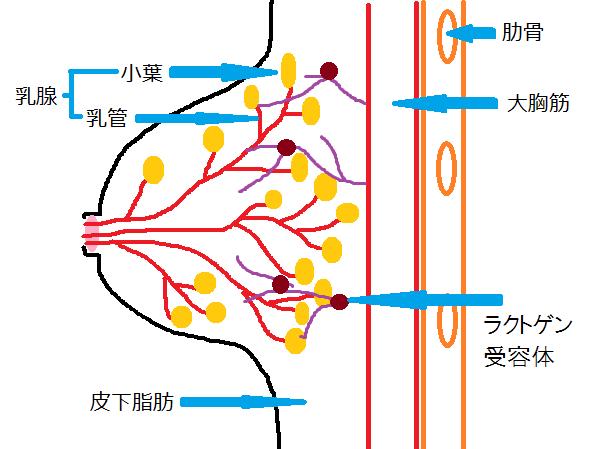 hinnyu-munenonaka